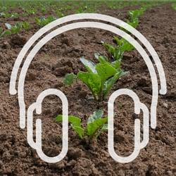 Podcast_Cover_zuckerrüben